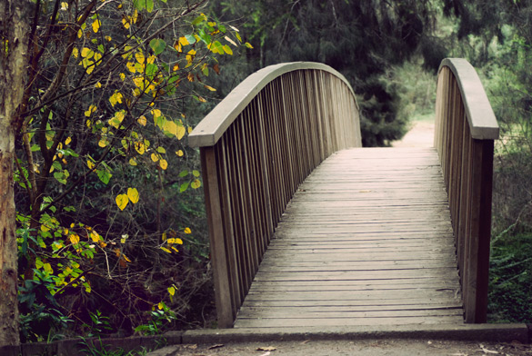 Image of a beautiful bridge in a flowery, wooded area